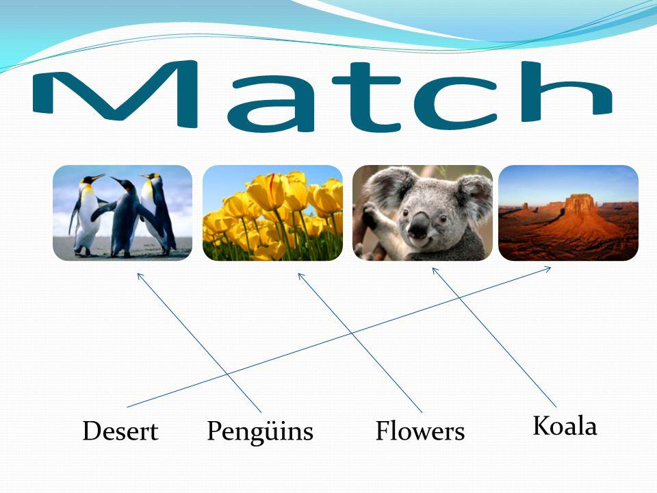 Match Pengüins Flowers Koala Desert