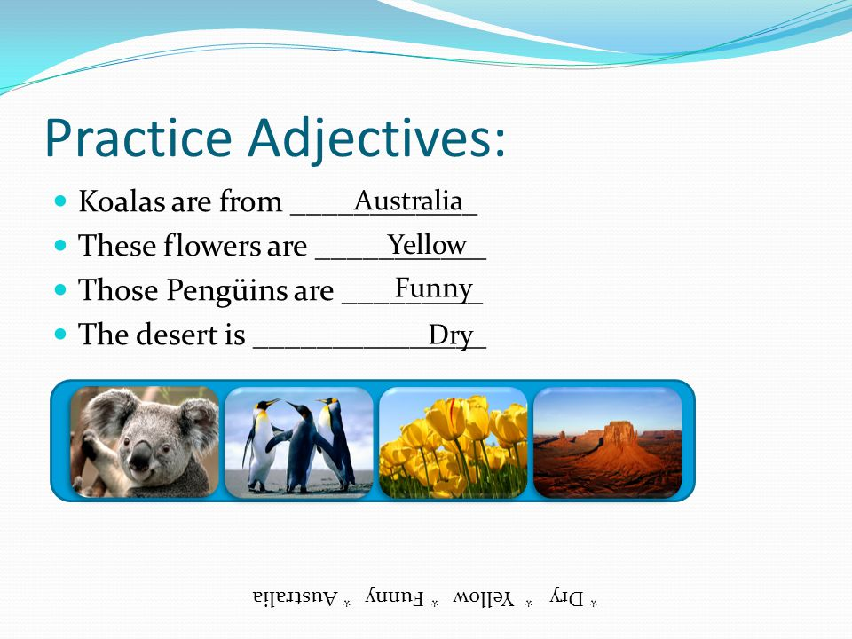 Practice Adjectives: Koalas are from ____________