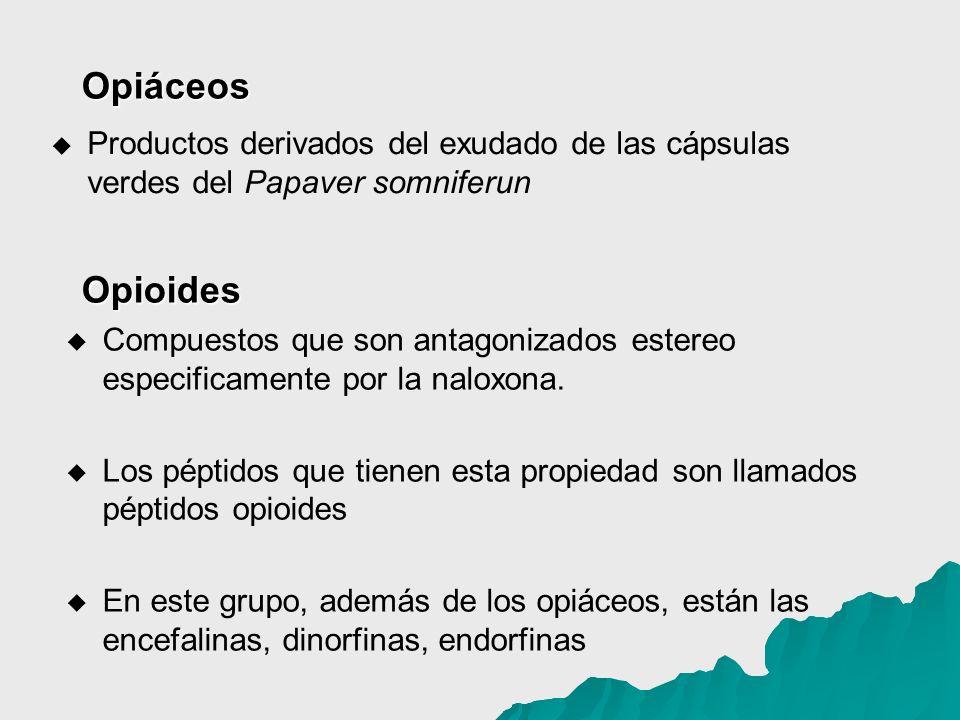 Opiáceos Productos derivados del exudado de las cápsulas verdes del Papaver somniferun. Opioides.