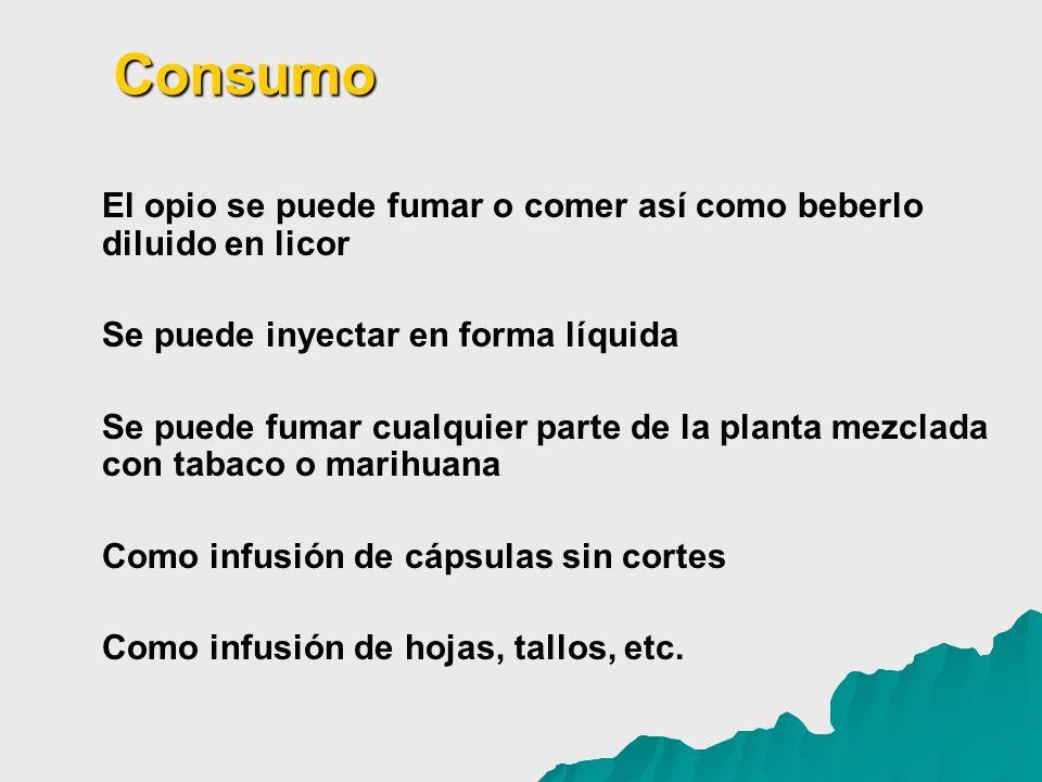 Consumo El opio se puede fumar o comer así como beberlo diluido en licor. Se puede inyectar en forma líquida.