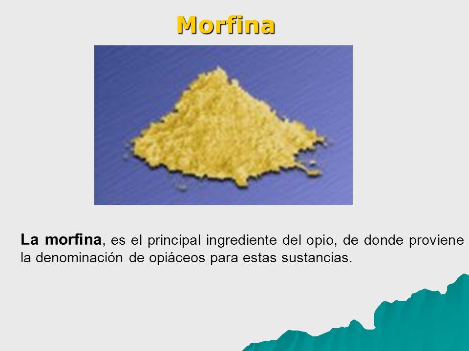 Morfina La morfina, es el principal ingrediente del opio, de donde proviene la denominación de opiáceos para estas sustancias.