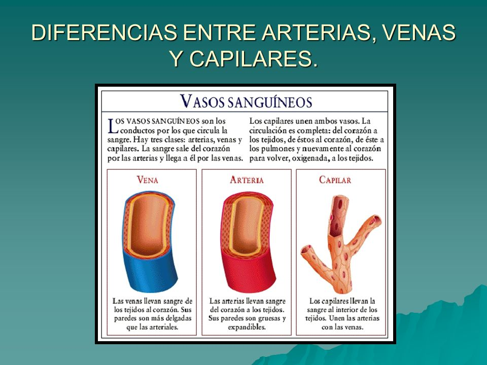 UNIDAD IV SISTEMA CARDIOVASCULAR RESPIRATORIO - ppt video online ...