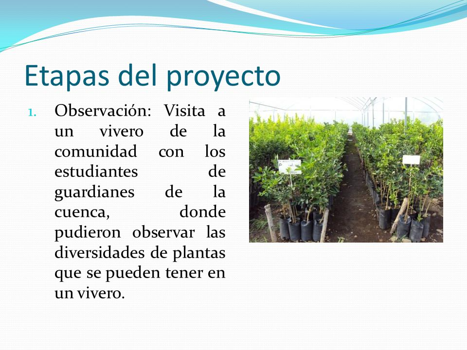 escuela don bosco rural jornadas ambientales ppt video On que plantas se pueden sembrar en un vivero