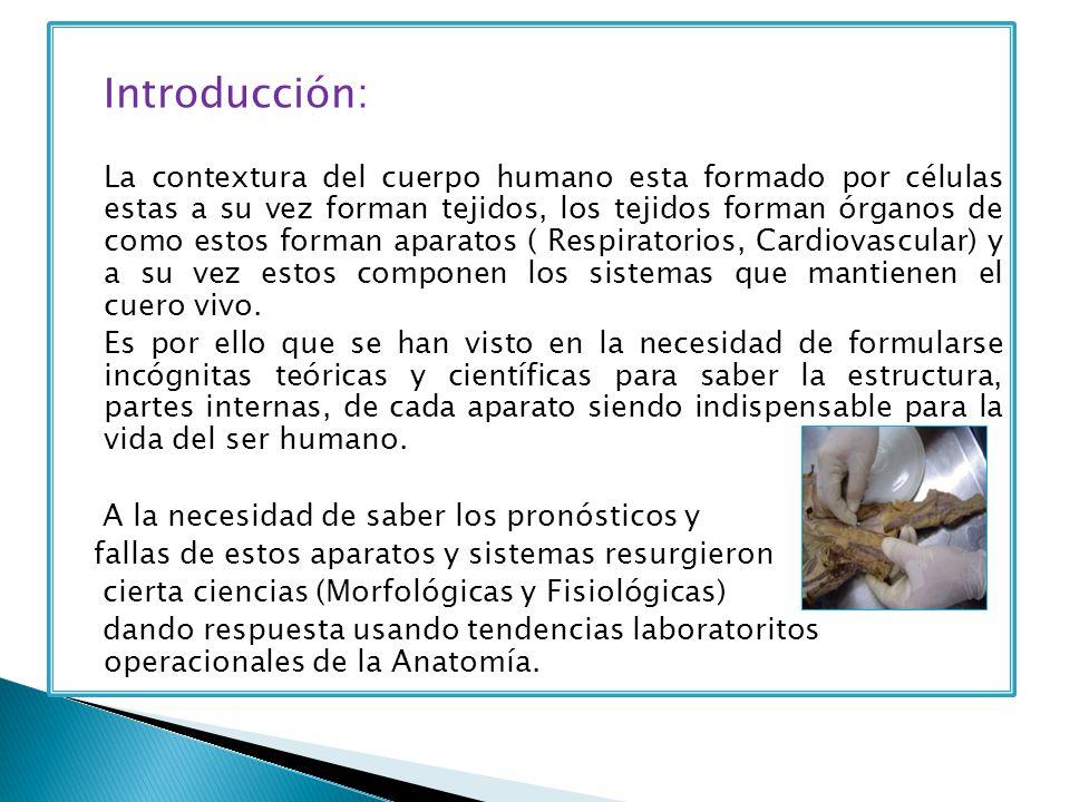 Lujo Anatomía Y Fisiología Introducción Patrón - Anatomía de Las ...