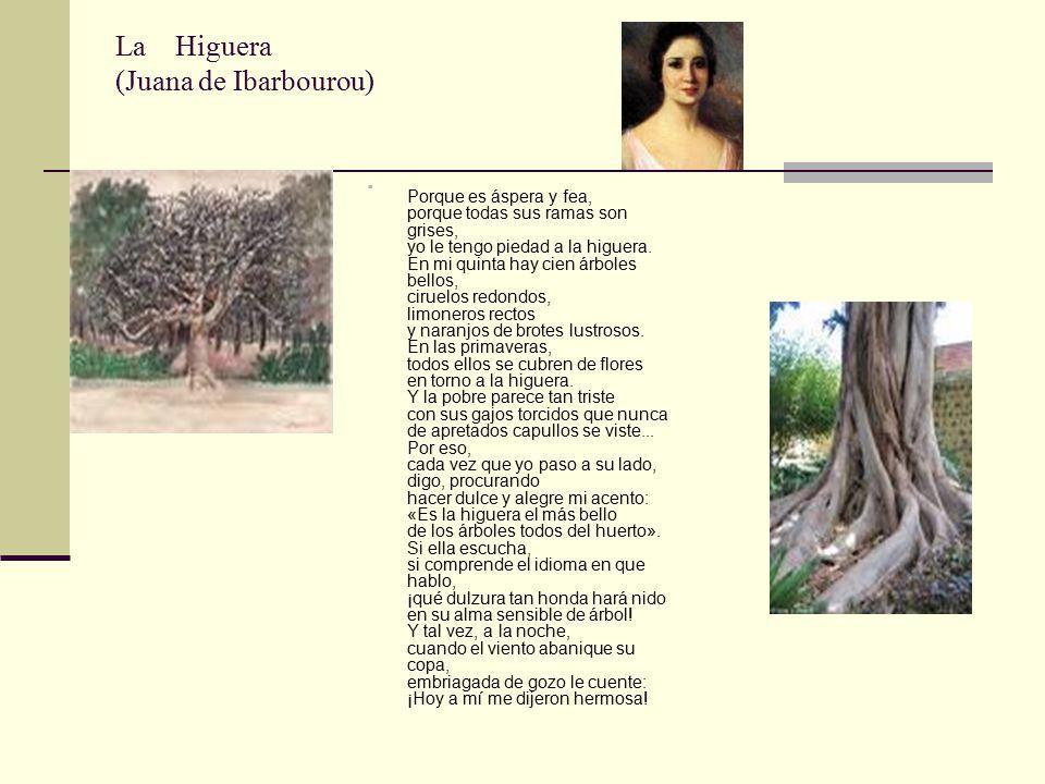 La Higuera (Juana de Ibarbourou)