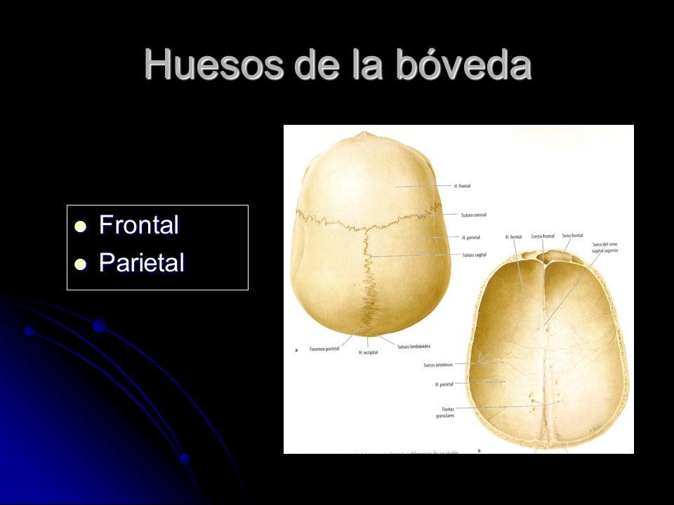 Huesos de la bóveda Frontal Parietal