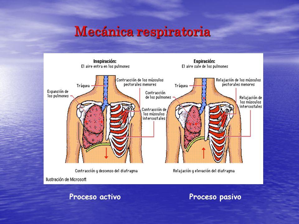 Dorable Pulmón Anatomía Fotos Composición - Imágenes de Anatomía ...