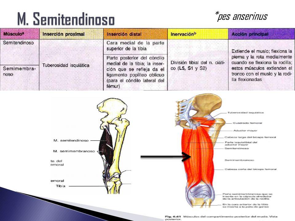 Magnífico Pes Anatomía Pata De Ganso Galería - Imágenes de Anatomía ...