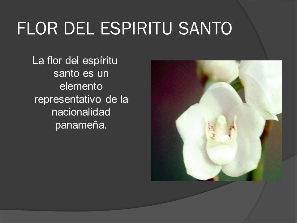 FLOR DEL ESPIRITU SANTO