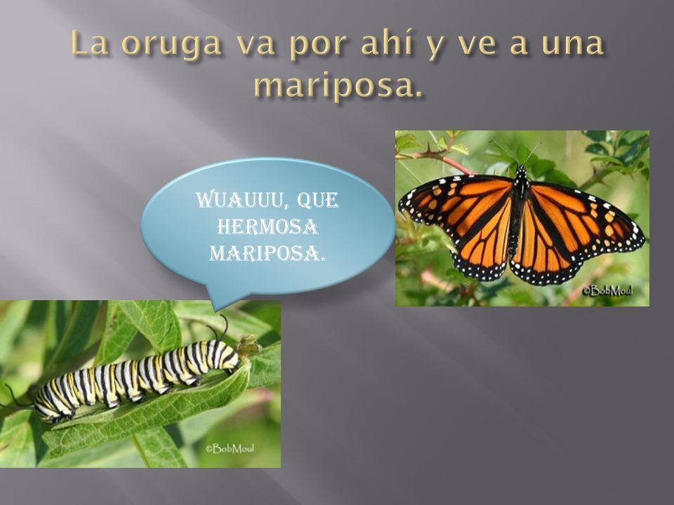 La oruga va por ahí y ve a una mariposa.