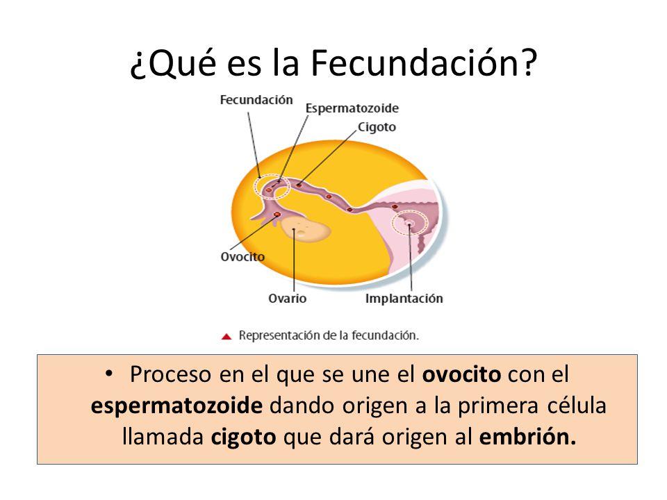 ¿Qué es la Fecundación
