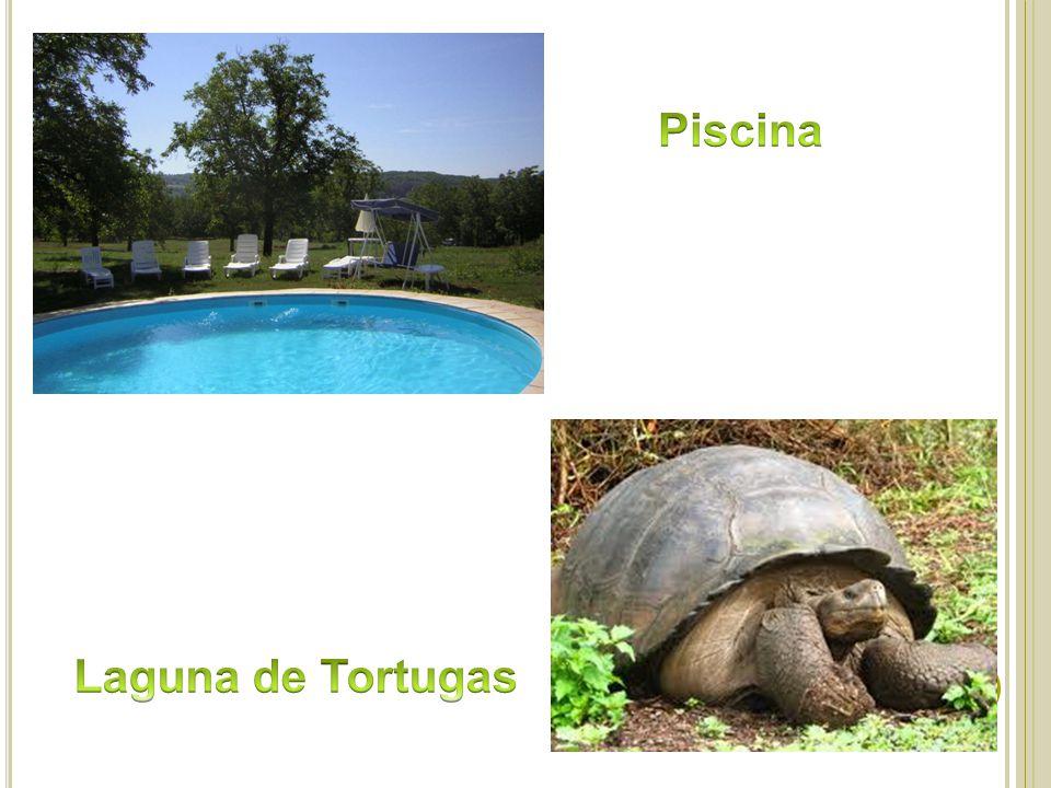 Estudio de factibilidad para la implementaci n de caba as for Piscina para tortugas
