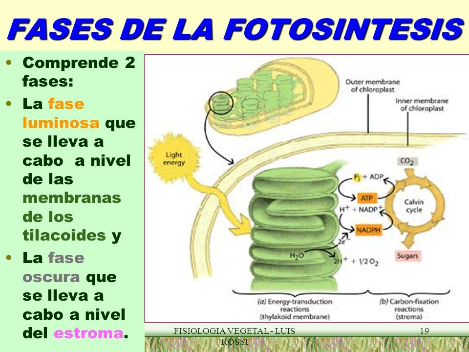 Fases de la fotosintesis wikipedia 15