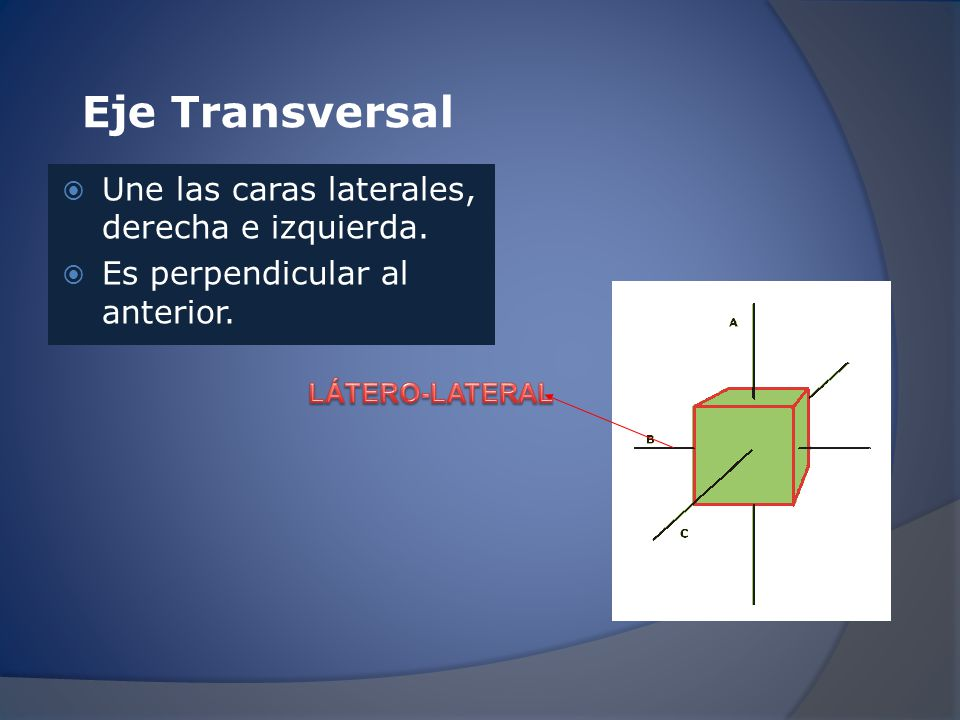 Eje Transversal Une las caras laterales, derecha e izquierda.