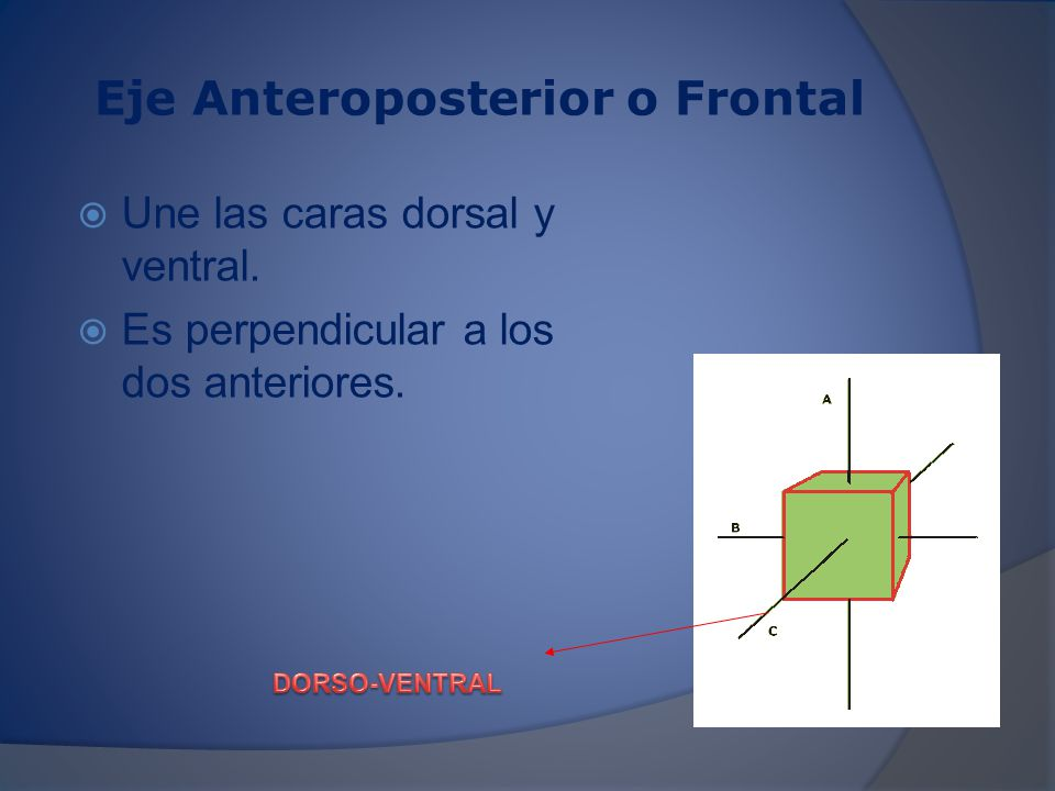 Eje Anteroposterior o Frontal