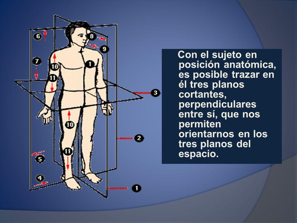 Con el sujeto en posición anatómica, es posible trazar en él tres planos cortantes, perpendiculares entre sí, que nos permiten orientarnos en los tres planos del espacio.