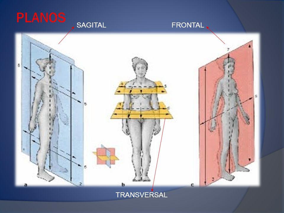 PLANOS SAGITAL FRONTAL TRANSVERSAL
