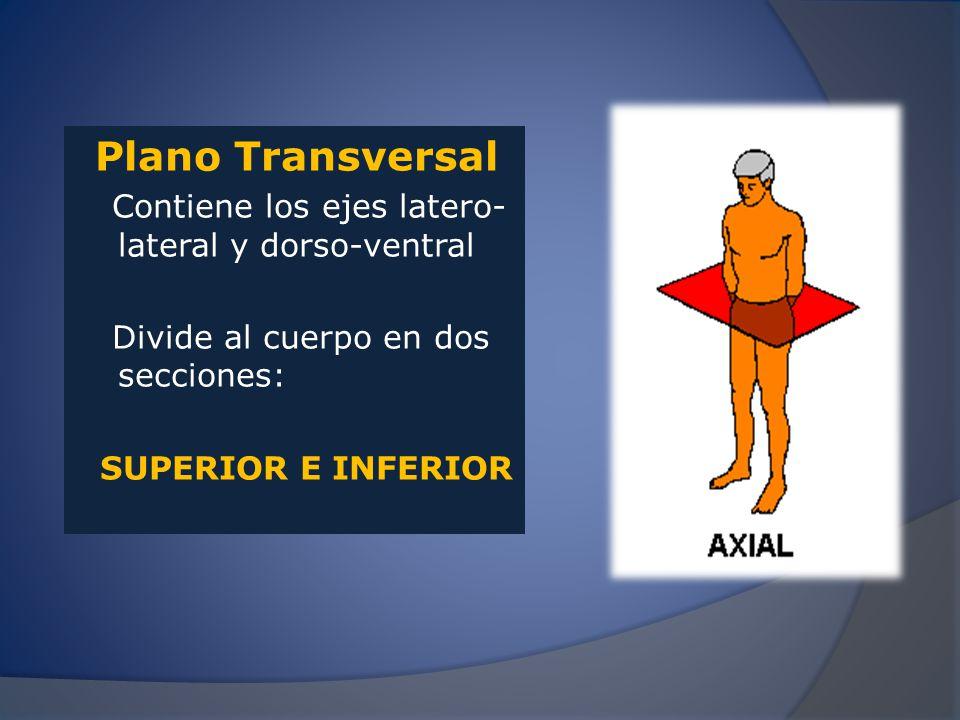 Plano Transversal Contiene los ejes latero-lateral y dorso-ventral