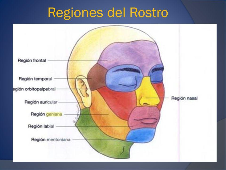 Regiones del Rostro