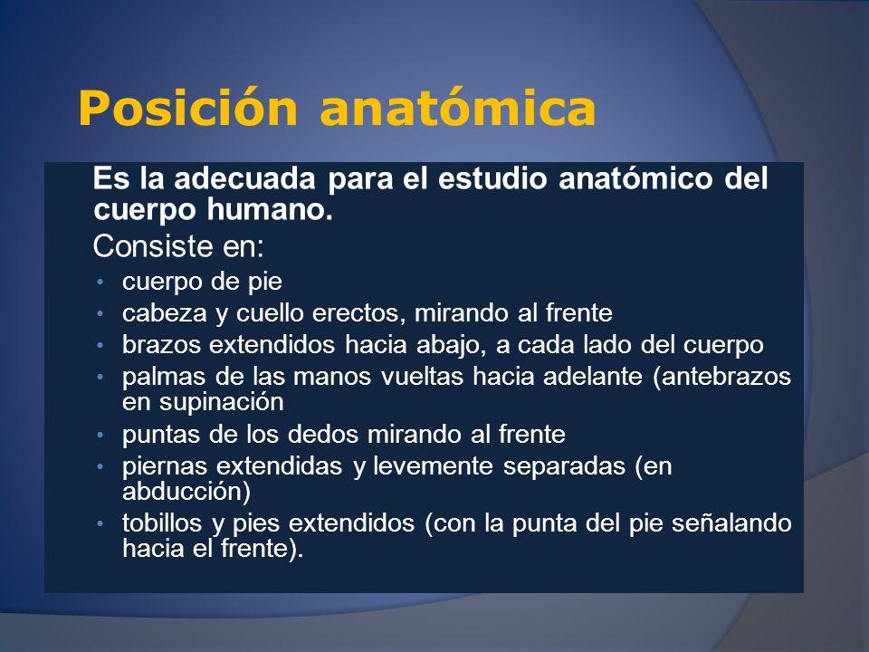Posición anatómica Es la adecuada para el estudio anatómico del cuerpo humano. Consiste en: cuerpo de pie.