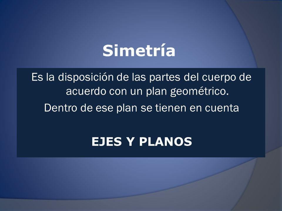 Simetría Es la disposición de las partes del cuerpo de acuerdo con un plan geométrico.