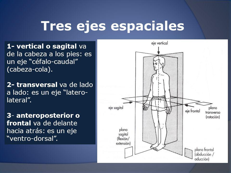 Tres ejes espaciales 1- vertical o sagital va de la cabeza a los pies: es un eje céfalo-caudal (cabeza-cola).