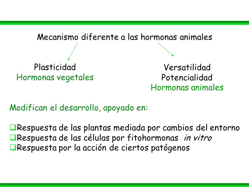 Funci n de los metabolitos secundarios ppt descargar for Hormonas en las plantas