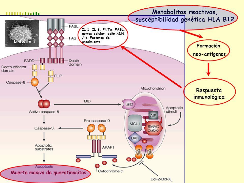 PATOGENIA Metabolitos reactivos, susceptibilidad genética HLA B12