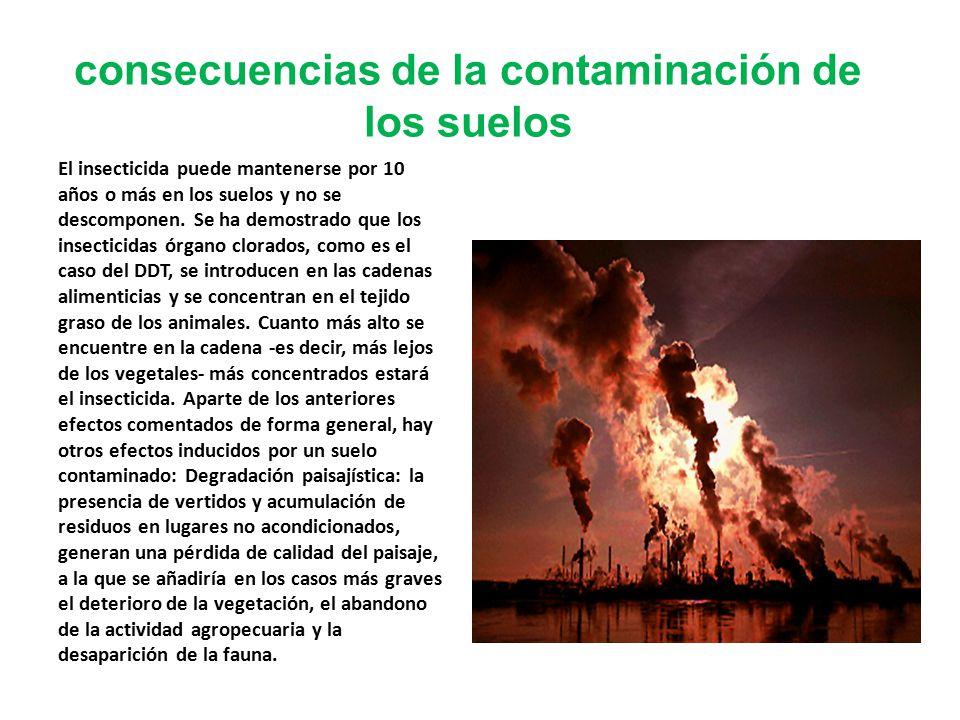 consecuencias de la contaminación de los suelos