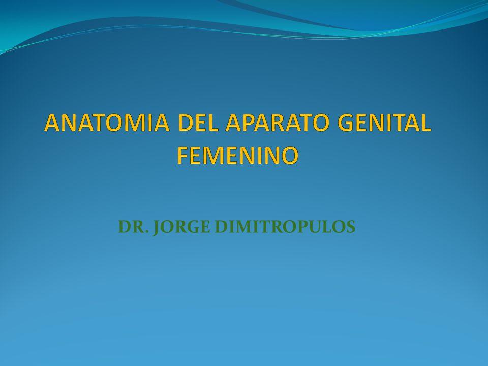 ANATOMIA DEL APARATO GENITAL FEMENINO - ppt video online descargar