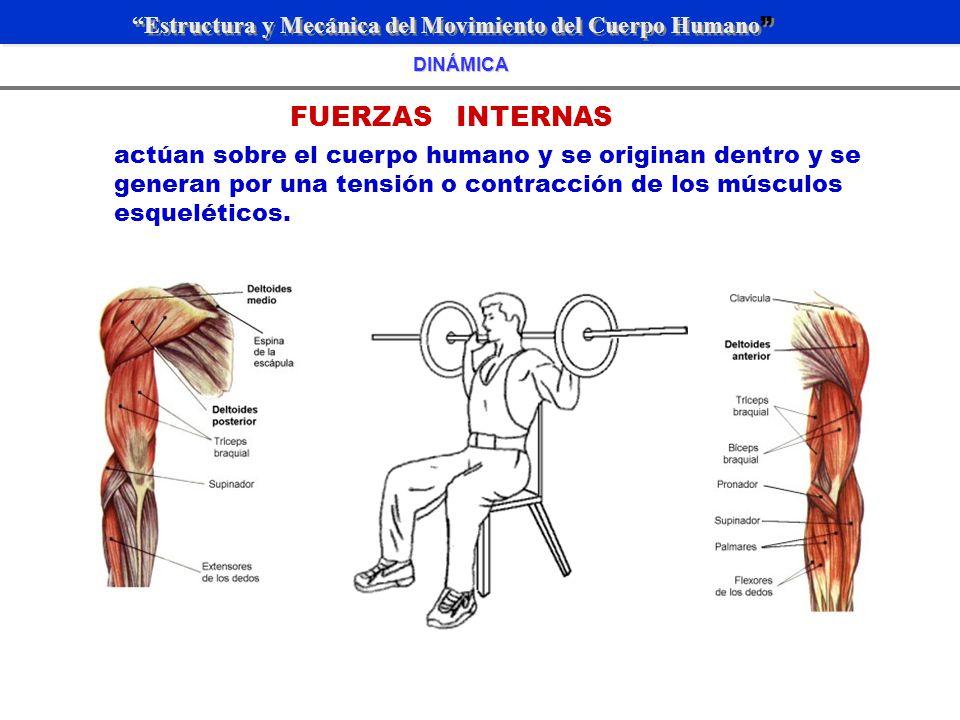 ESTRUCTURA Y MECÁNICA DEL MOVIMIENTO HUMANO - ppt video online descargar