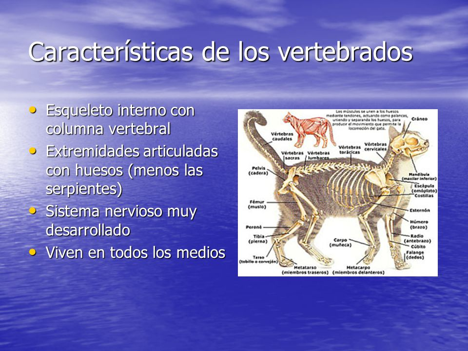 Tema 6 LOS VERTEBRADOS. - ppt video online descargar