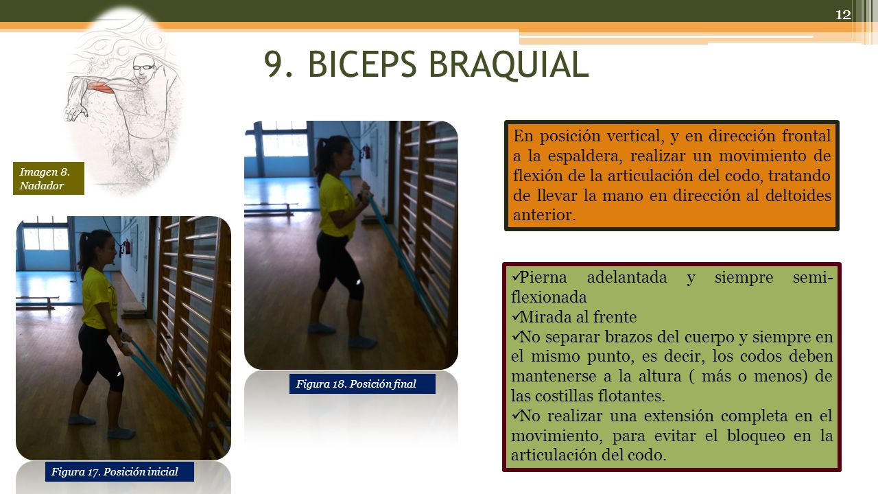 9. BICEPS BRAQUIAL