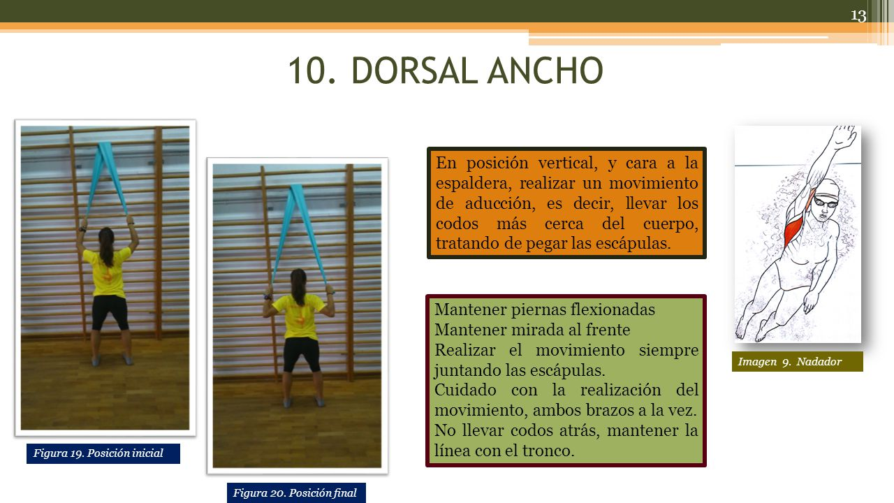 10. DORSAL ANCHO