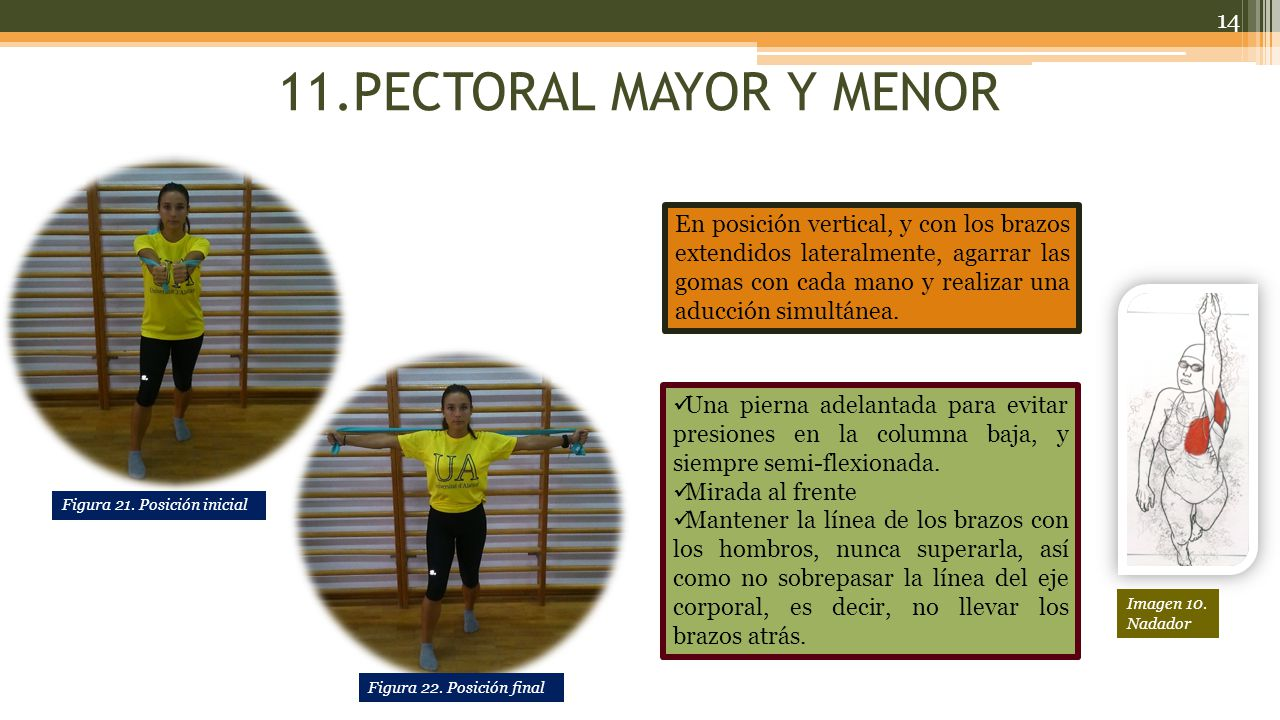 11.PECTORAL MAYOR Y MENOR