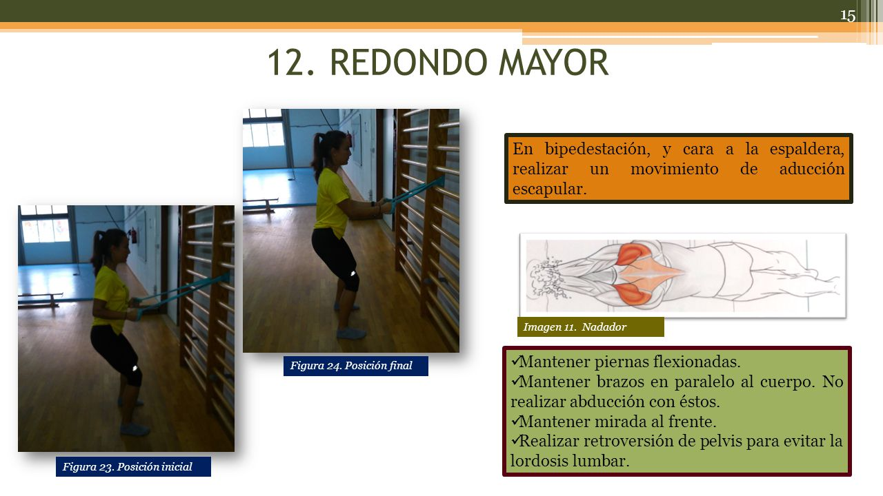 12. REDONDO MAYOR En bipedestación, y cara a la espaldera, realizar un movimiento de aducción escapular.