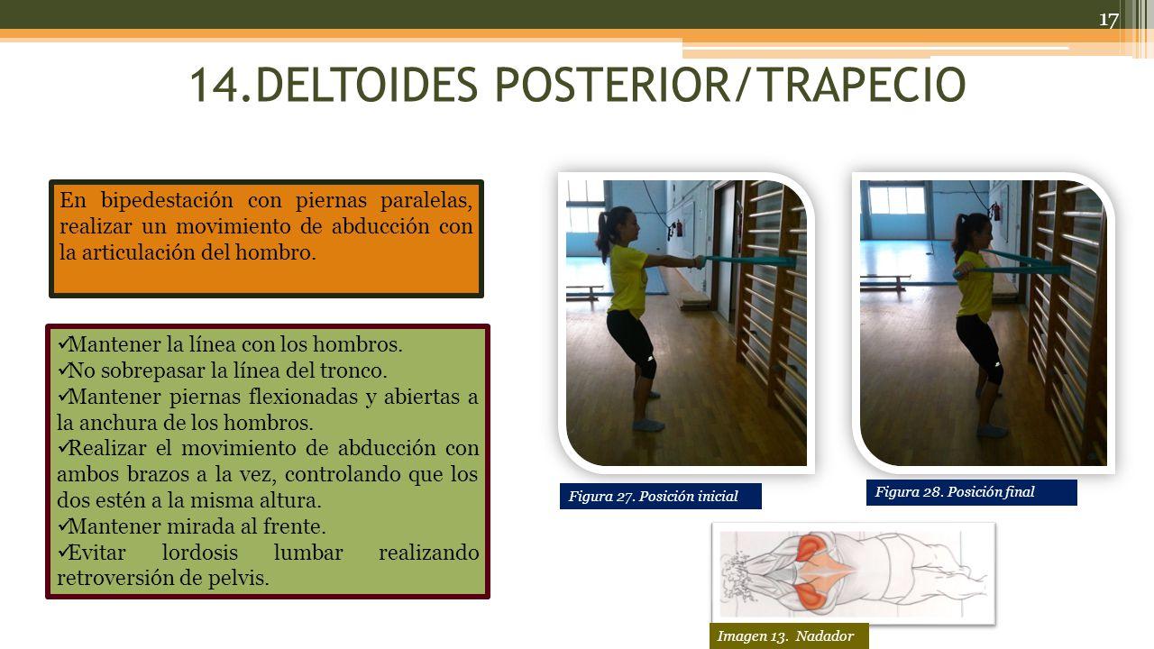 14.DELTOIDES POSTERIOR/TRAPECIO
