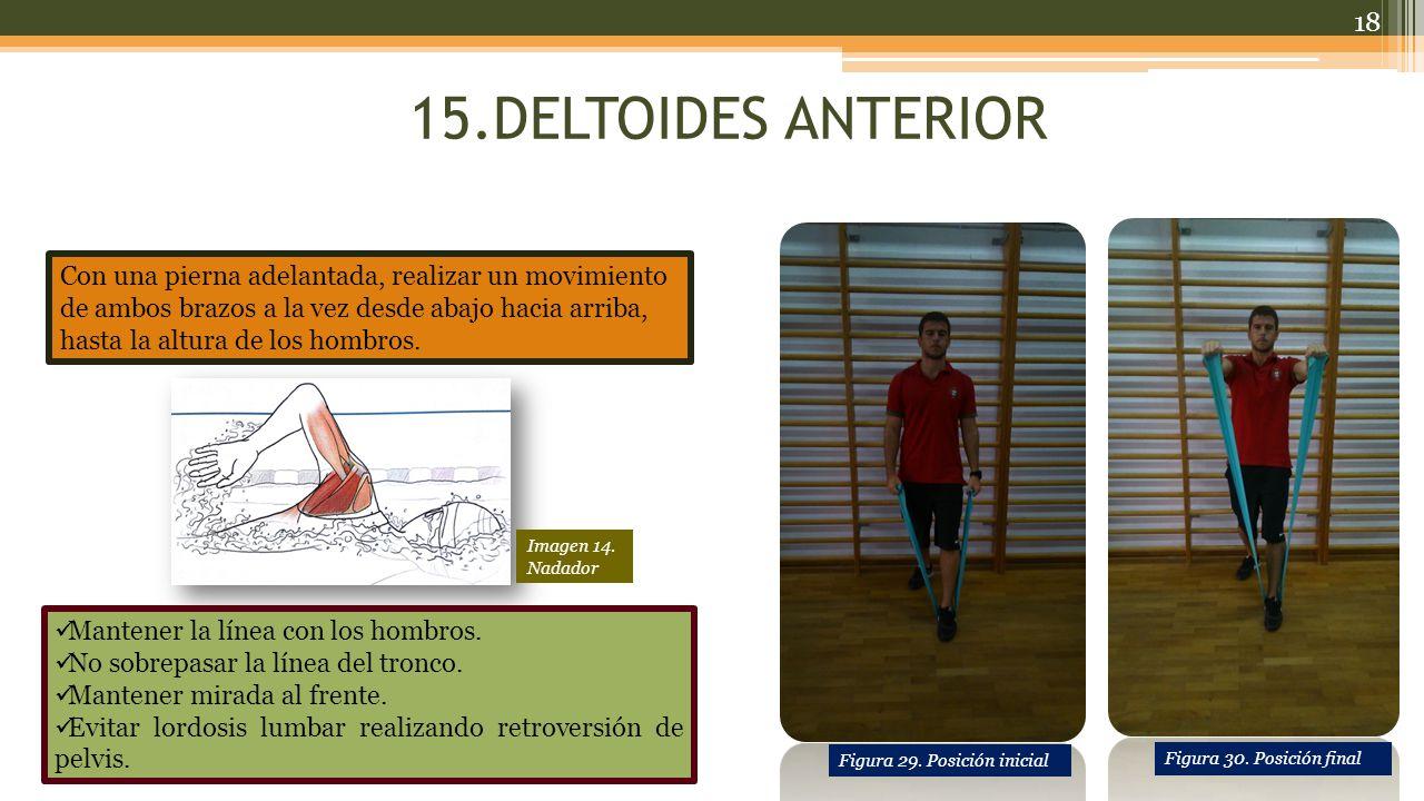 15.DELTOIDES ANTERIOR