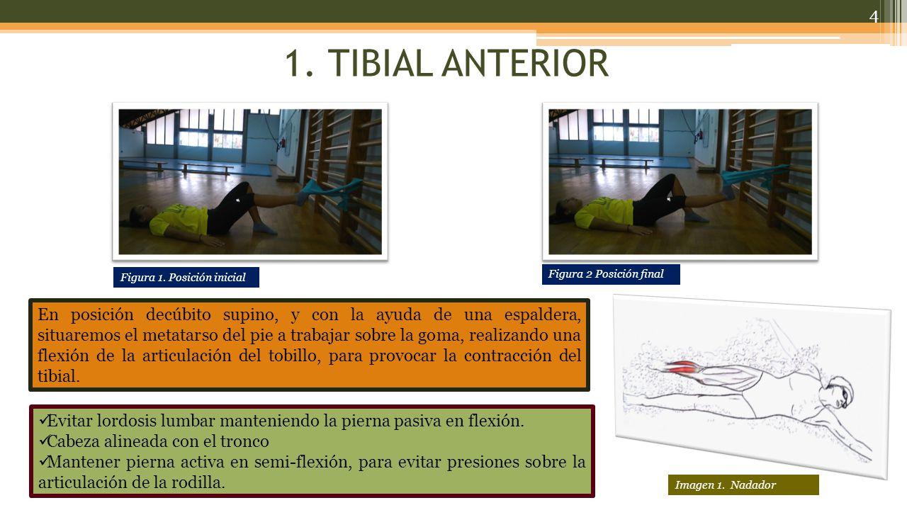 1. TIBIAL ANTERIOR Figura 1. Posición inicial. Figura 2 Posición final.