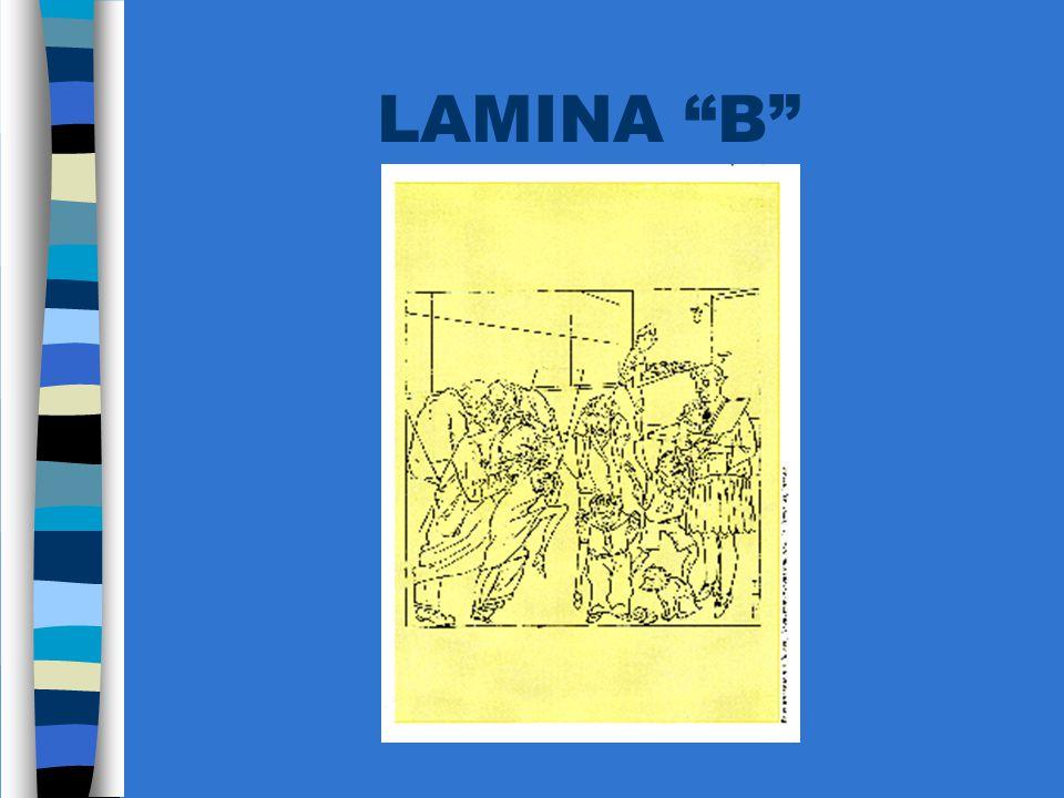 LAMINA B