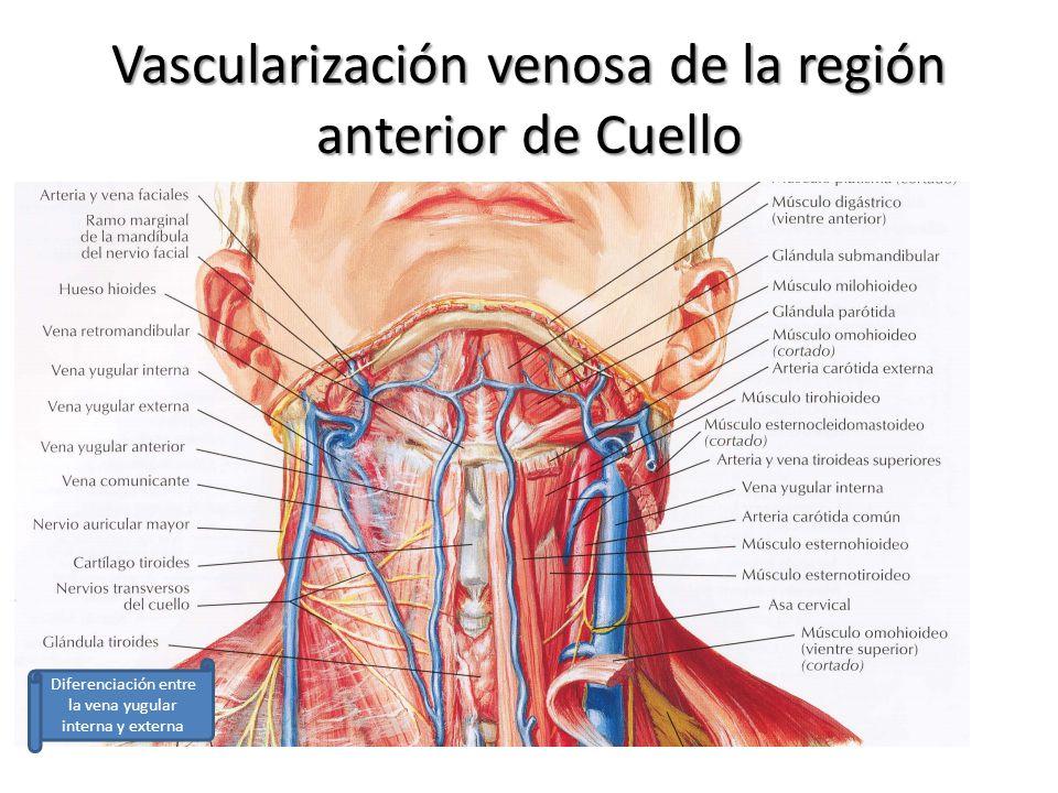 Bonito Anatomía Región Submandibular Molde - Anatomía de Las ...