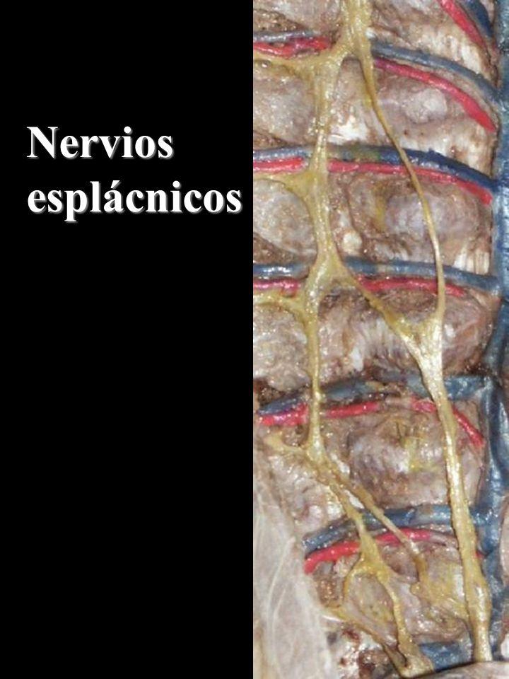 Descargar Videos De Cholo Juanito Y Richard Douglas