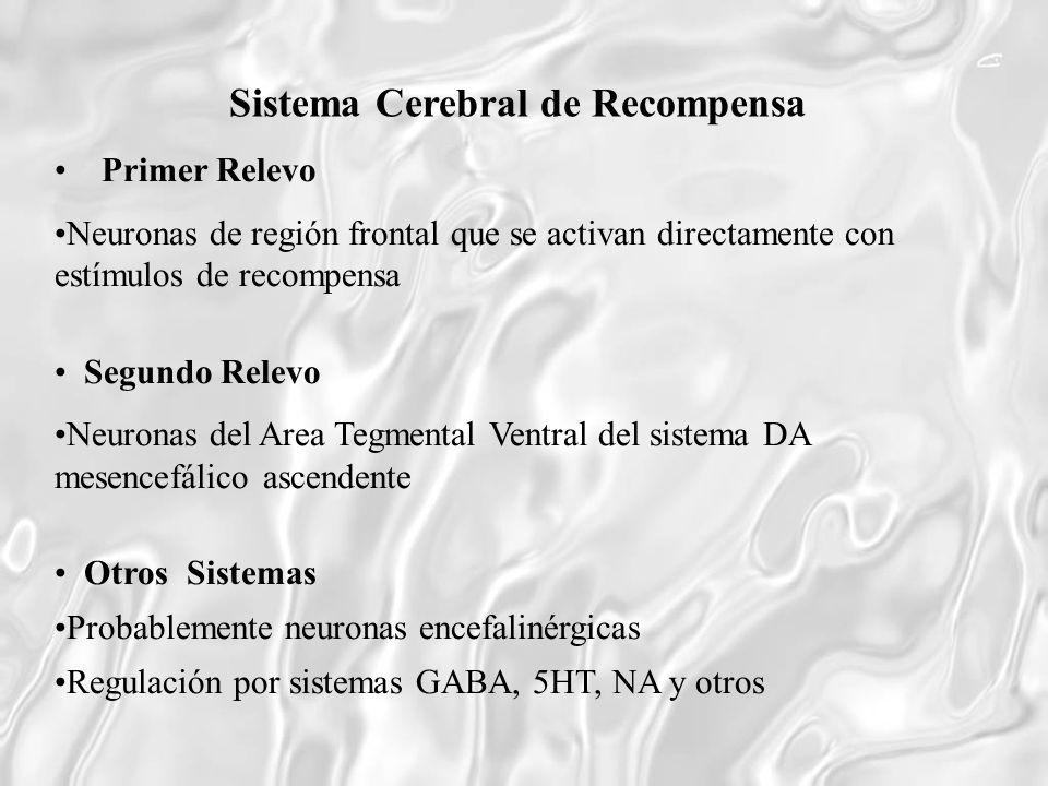 Sistema Cerebral de Recompensa