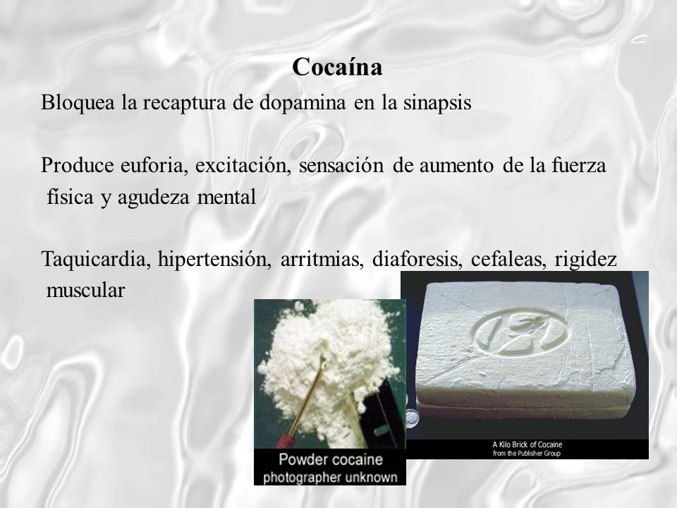 Cocaína Bloquea la recaptura de dopamina en la sinapsis