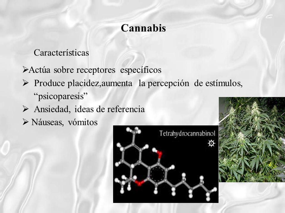 Cannabis Características Actúa sobre receptores específicos