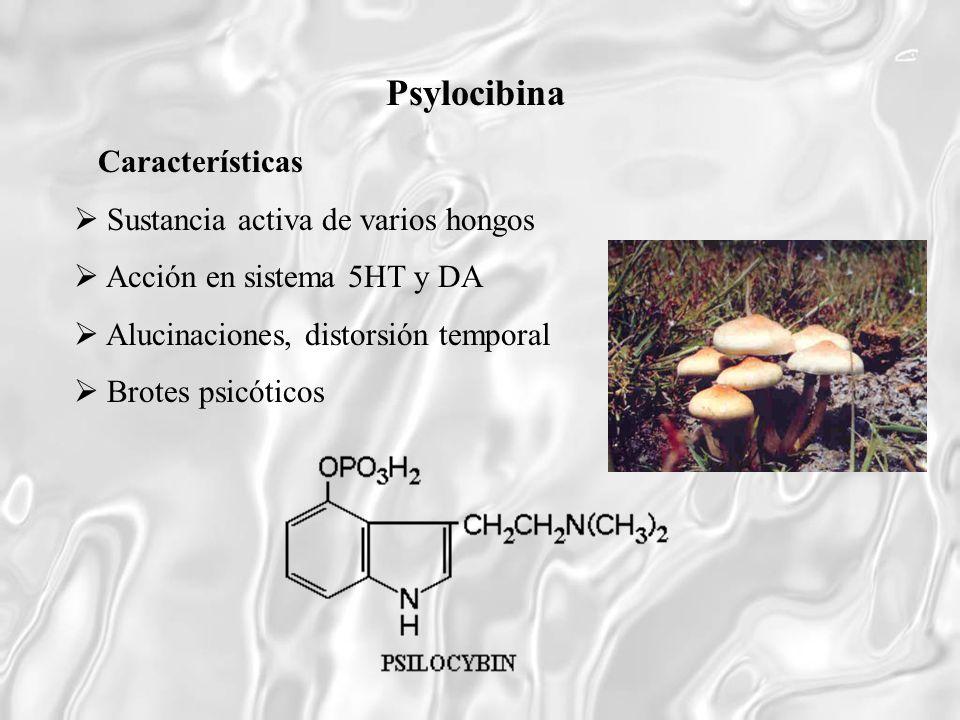 Psylocibina Características  Sustancia activa de varios hongos
