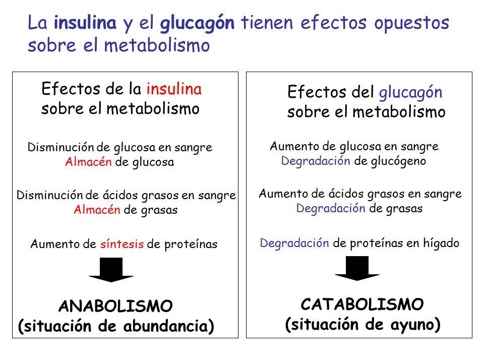 SISTEMA ENDOCRINO 34. Hormonas y mecanismos de acción