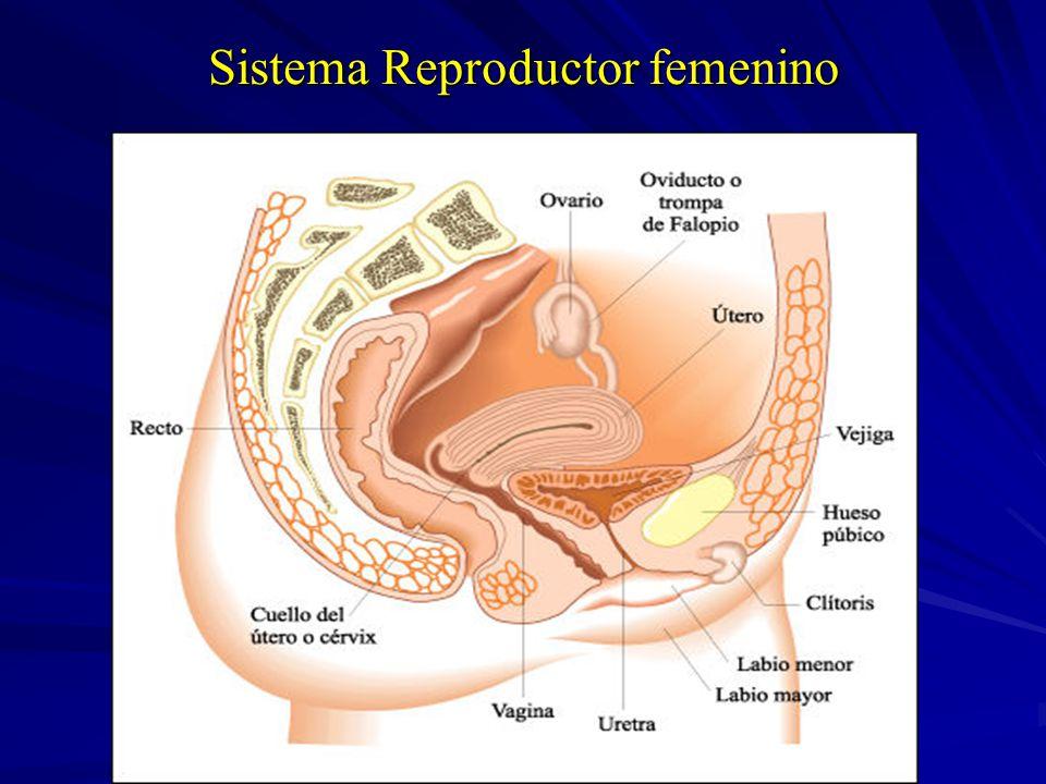 Reproducción y Sexualidad - ppt descargar