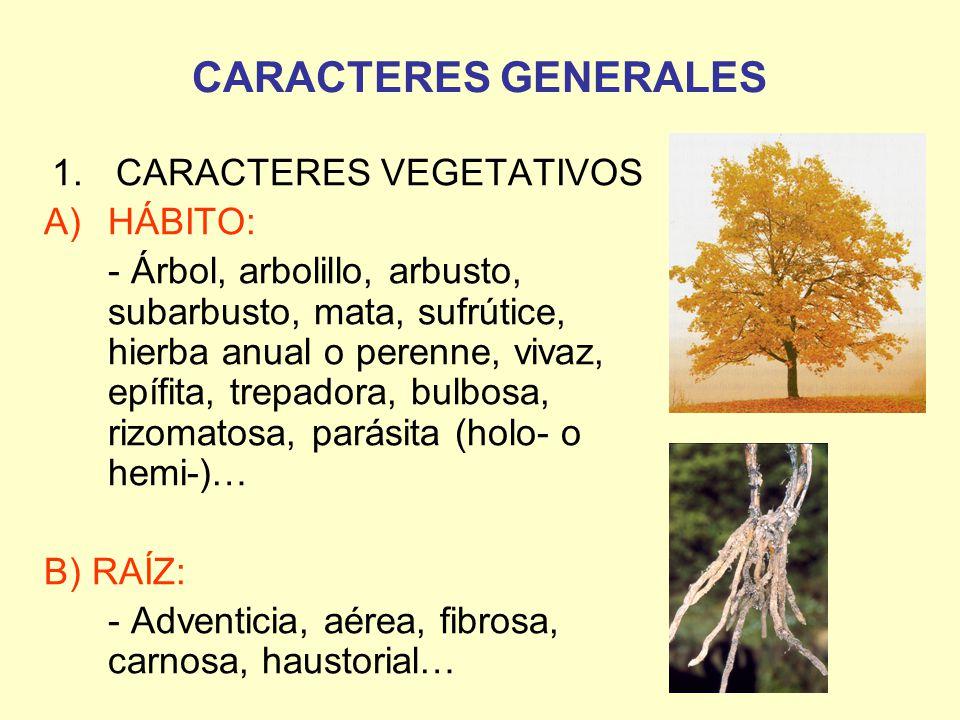 CARACTERES VEGETATIVOS - ppt video online descargar