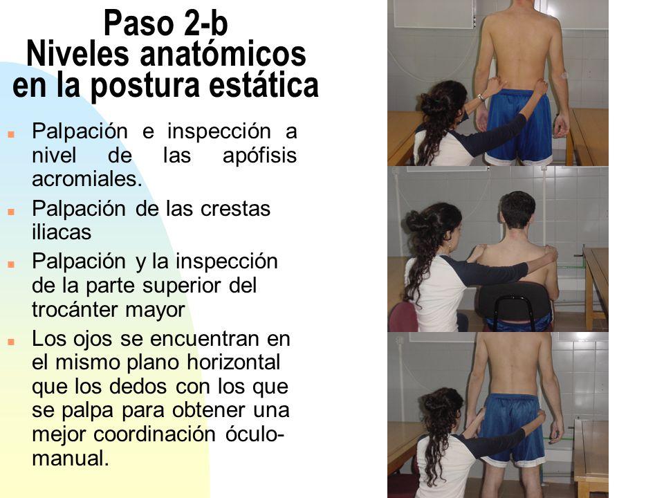 Paso 2-b Niveles anatómicos en la postura estática